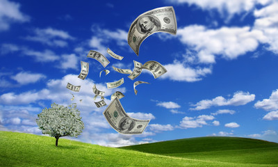 .falling dollar bills from money tree