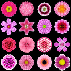 Big Collection of Various Purple Pattern Flowers Isolated