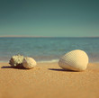 seashells on beach - vintage retro style