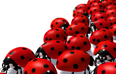 Group of ladybugs