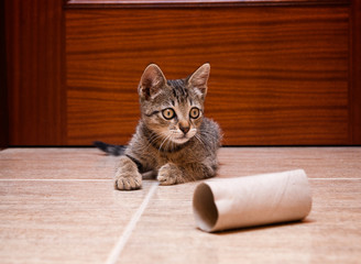 Kitten playing with a cardboard toilet paper roll