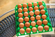 Conveyor belt transporting crate with fresh eggs