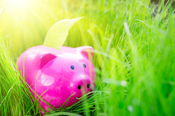 Piggy bank and leaf