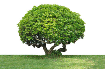 Tree trimming isolated on white background, clipping path includ