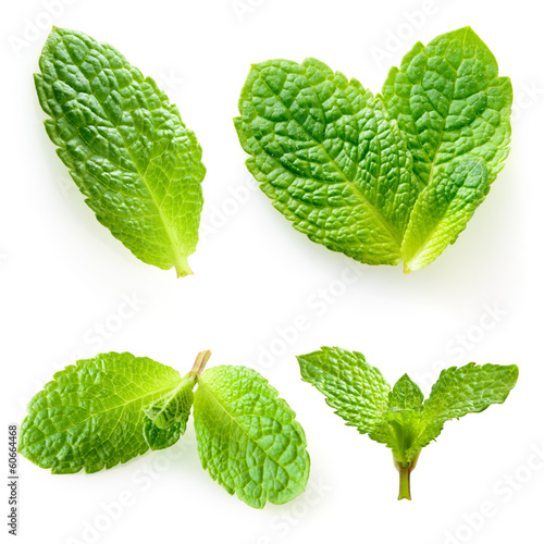 Fresh mint isolated on a white. Collection