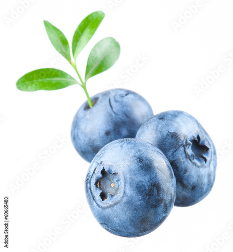 Blueberry. Three bilberries with leaves on white