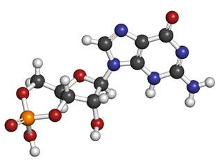 Cyclic guanosine monophosphate (cGMP) molecule.