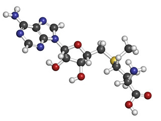 S-adenosyl methionine (SAM) molecule.