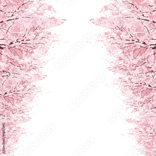桜 並木 Rows of Cherry Blossom trees