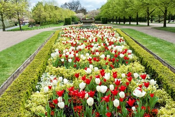 Flower alley in the park