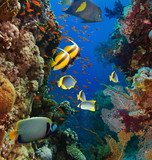 Coral and fish - 60672607