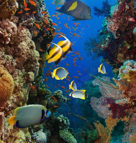 Fototapeta Coral and fish