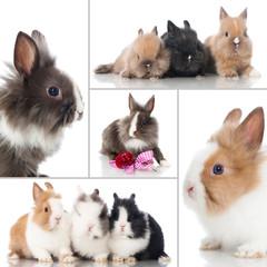 Kaninchen - Collage