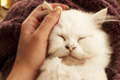 Woman petting kitten