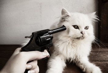 Gun and a kitten