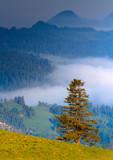 Wiosenny Mglisty Świt w Pieninach