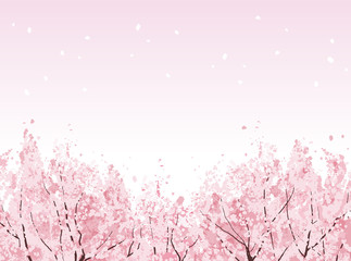 桜 背景 Full bloom of beautiful Cherry blossom trees