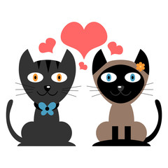 Cute couple of cats in love