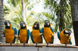Fotoroleta Macaw.