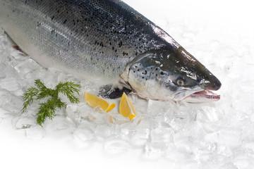 Fresh Salmon with lemon.
