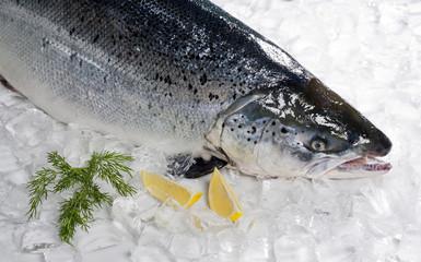 Fresh Salmon filet with lemon.