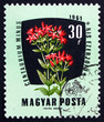 Postage stamp Hungary 1961 Common Centaury, Medical Herb