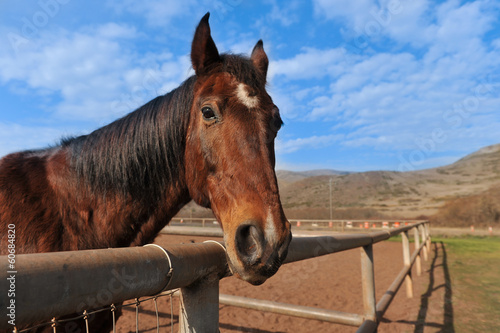 Portrait of a horse outdoors in field