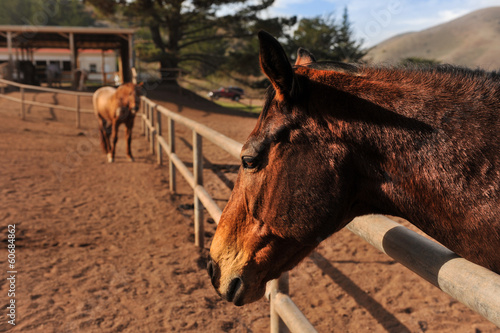 Horses in a fenced in area with mountains