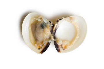 raw clam