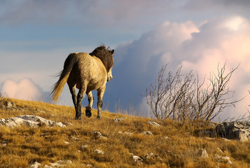Wild horse walking in the mountains
