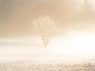 einsamer Baum im Winter Nebel 32
