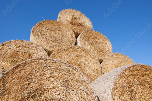 Gathered hay bales in a field