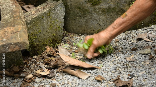 senior woman hands cleaning and keep leaf
