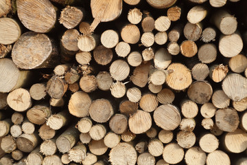 Stacked logs in forest.