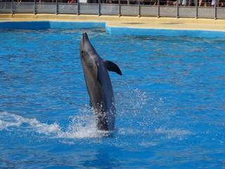 dauphin seul