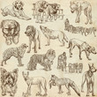 DOGS (Canidae) - (no.1) - hand drawings on paper