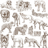 DOGS (Canidae) - (no.1) - hand drawings on white