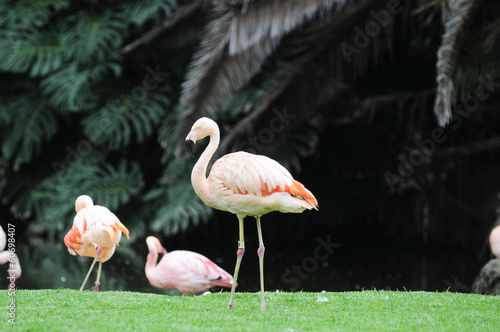 Pink Flamingo Bird on the Floor