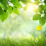 Fototapety Natural green background