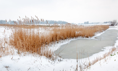 Yellowed reeds around  frozen water