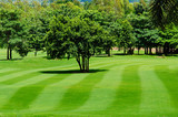 Freshly mown lawn and trees in a golf course