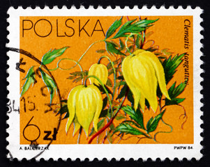 Postage stamp Poland 1984 Golden Clematis, Flowering Plant