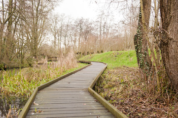Wooden pathway through swamp forest