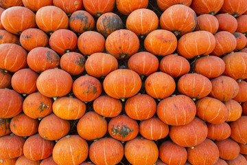 Wall of colorful pumpkin.
