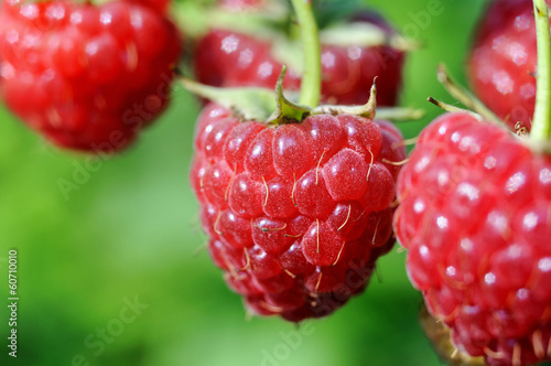 close-up of ripe raspberry