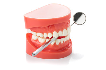 dental jaw model with dental mirror