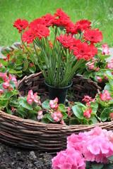 Blütenpracht auf dem Friedhof