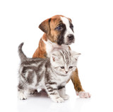 Scottish kitten and puppy looking away. isolated on white