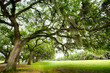 Savannah Oaks - 60712842