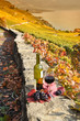 Red wine and grapes. Terrace vineyards in Lavaux region, Switzer